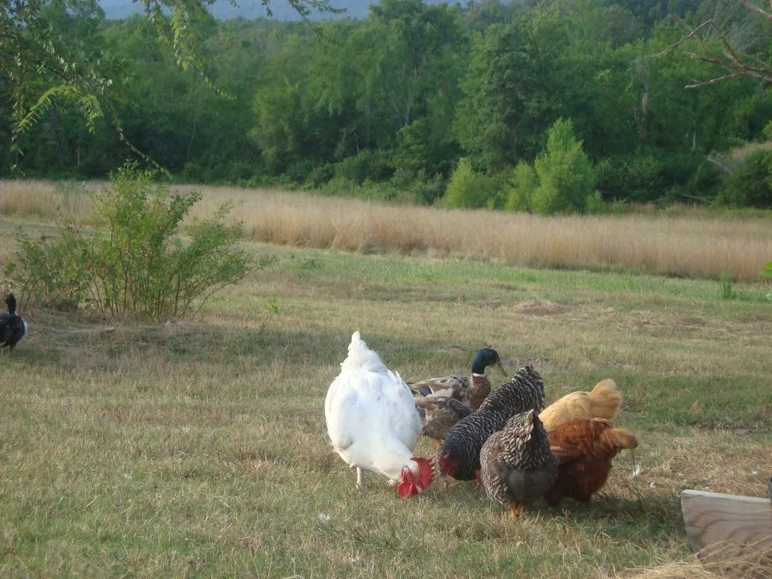 we enjoy our chickens.... and you will as well.