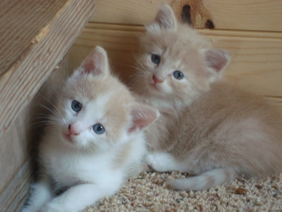 """Usually there are kittens to be found in a """"hiding place"""" that the mama has found!   We even give them away when people beg for them!"""