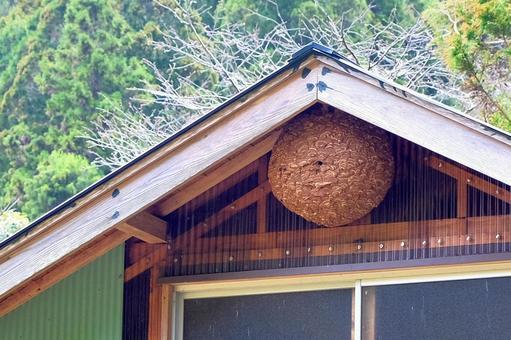 軒下に作ったハチの巣