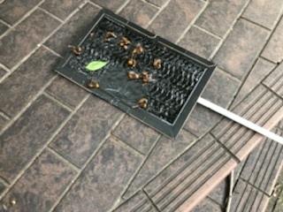 名古屋市守山区で大スズメバチが緊急出撃!