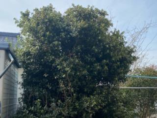 モサモサした木