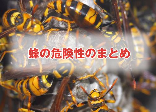 蜂の危険性