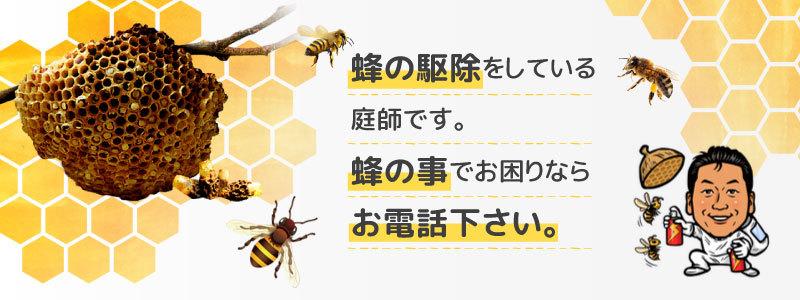 蜂の駆除をしている庭師です。