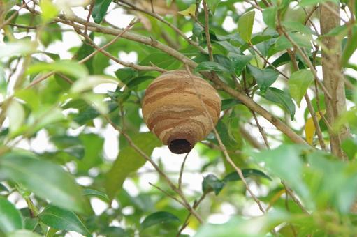 トックリ型のハチの巣
