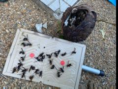 戻り蜂対策作業