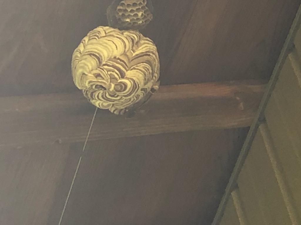 軒下に作る蜂の住処