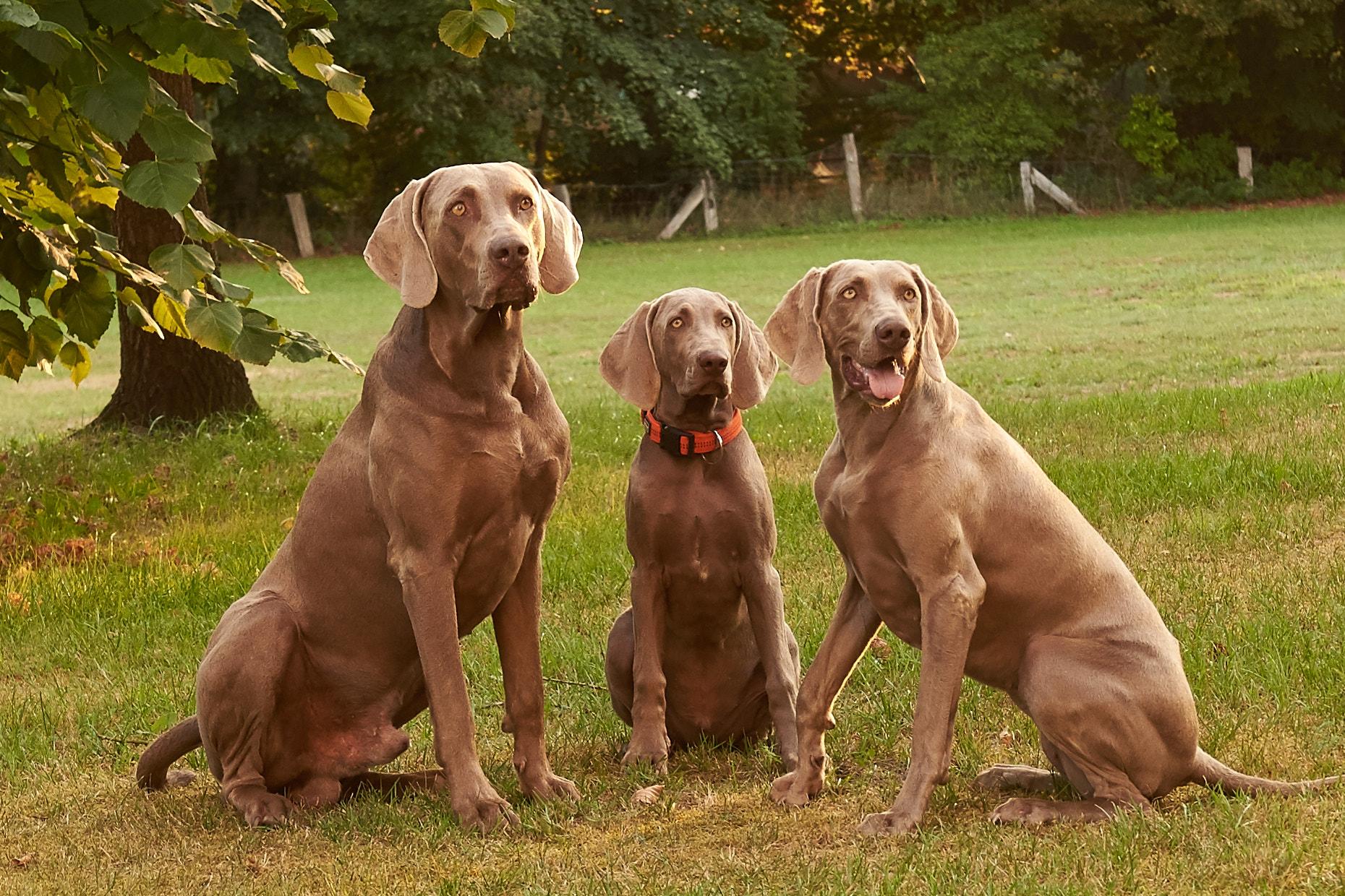 Das Trio :)