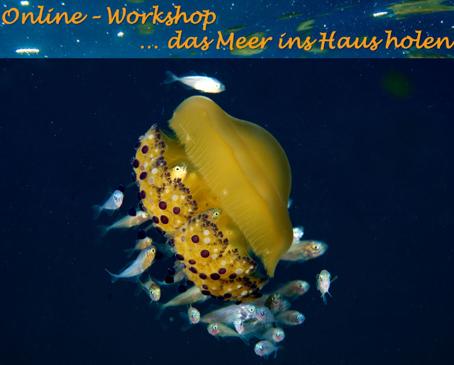 Online Workshop- das Meer ins Haus holen
