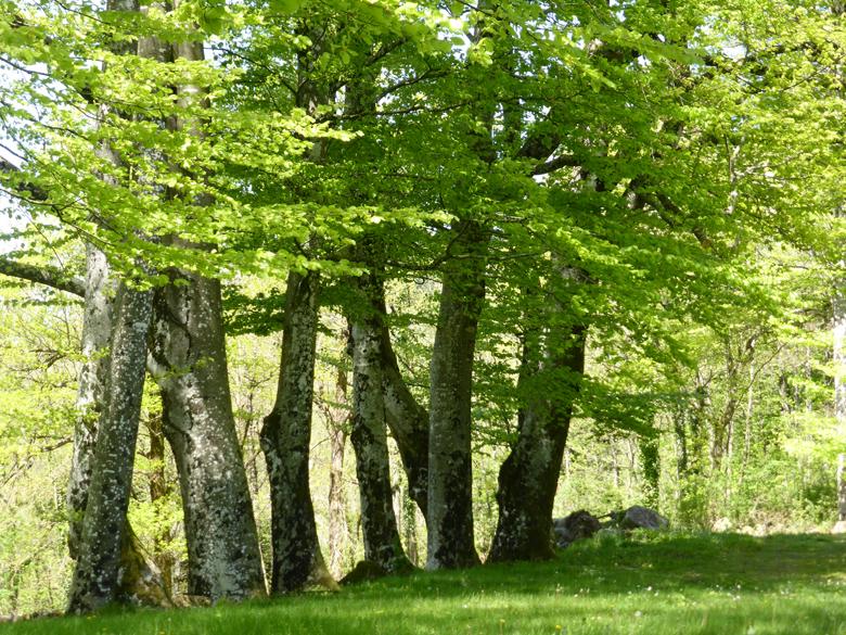 Jeûner, randonner dans la nature magnifique, recevoir chaque jour un massage...