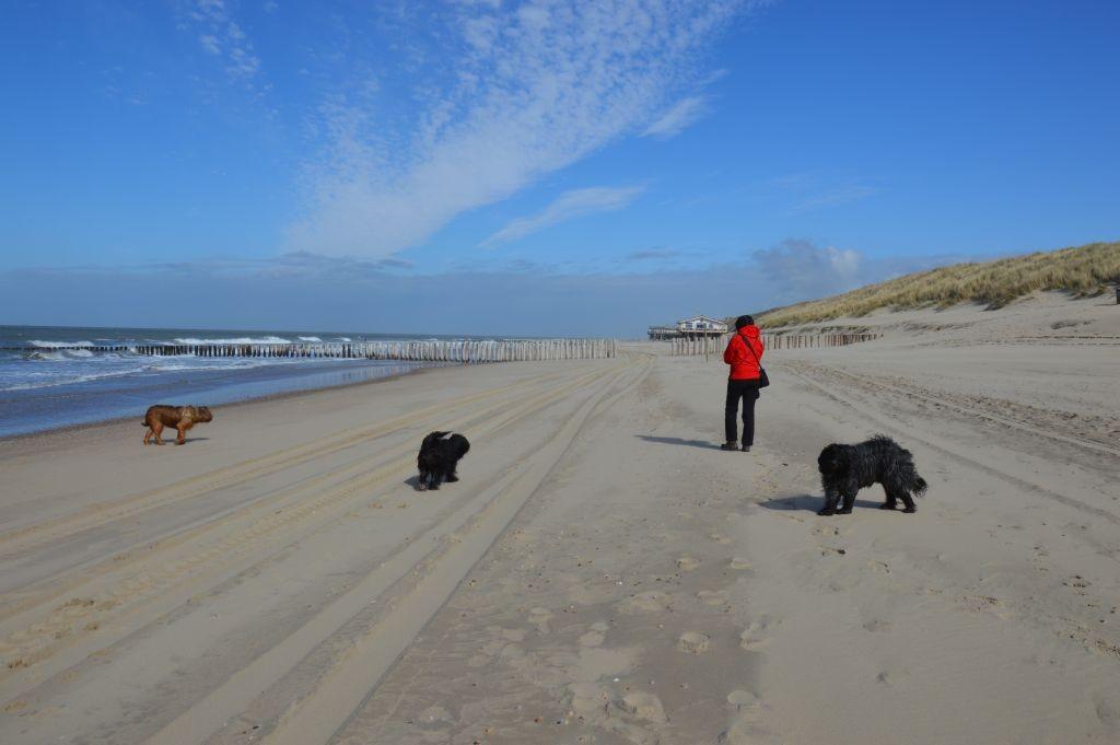 ganz schön windig ... am Strand von Domburg