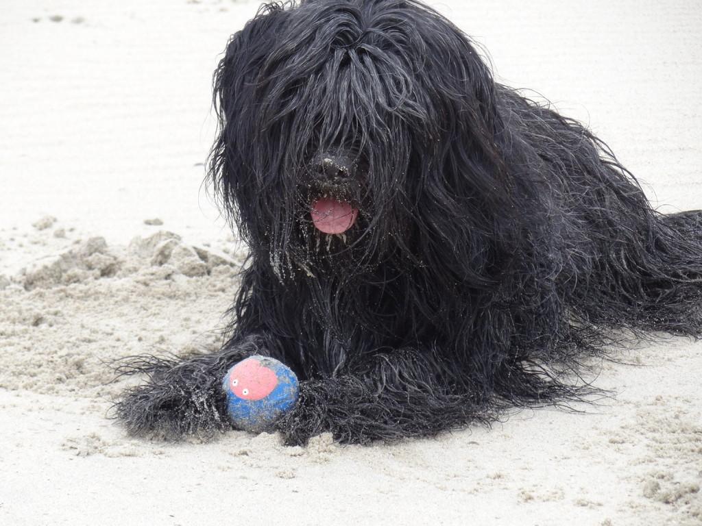 Lotta und ihr Lieblingsball