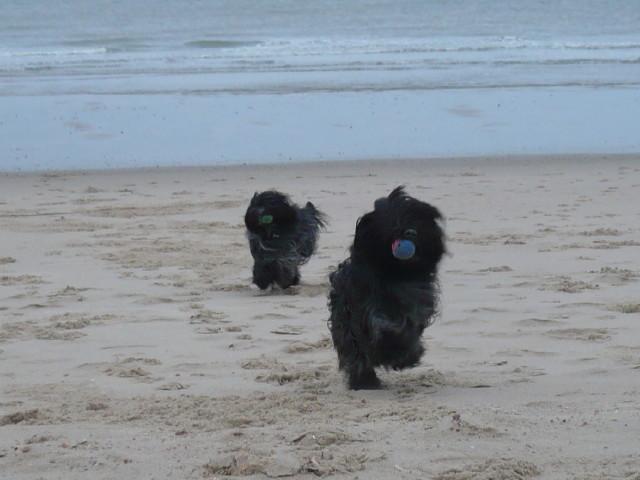 Toben am Strand macht auch bei schlechtem Wetter Spaß