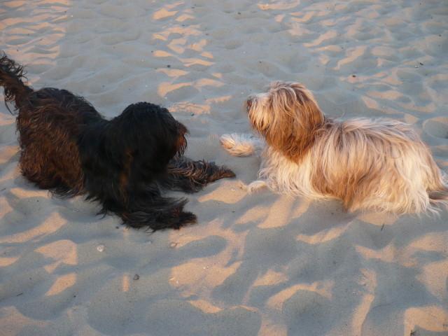 zwei auf einer Wellenlänge: Lotta und Ebby