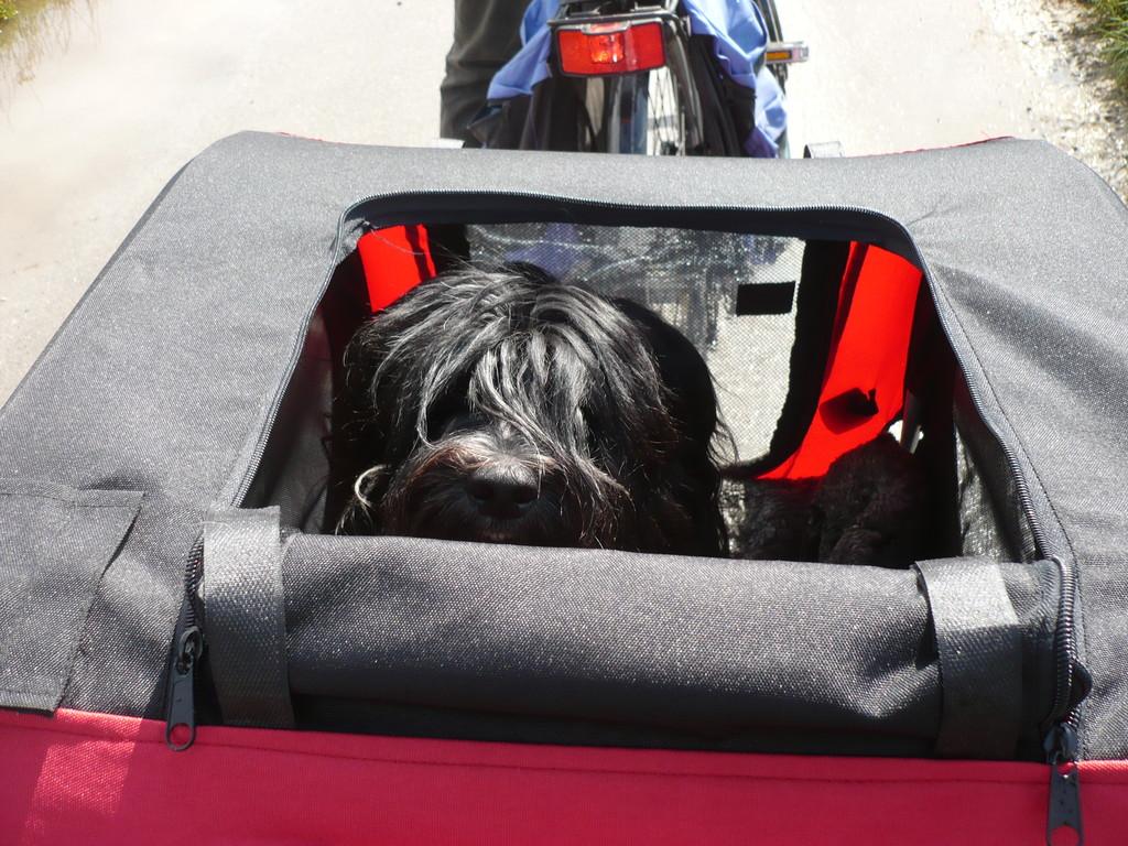 Lilli im neuen Cabrio ;-).