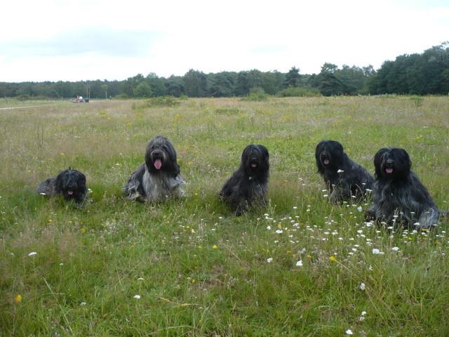 5 Freunde (Bommel, Dyk, Lotta, Amie u. Lilli)
