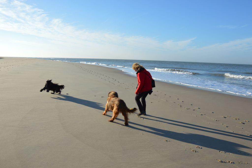 Strand bei Vrouwenpolder
