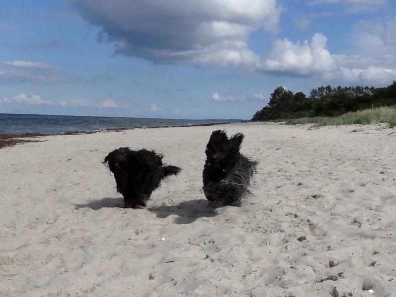 ... endlich wieder Sand unter den Pfoten :-)