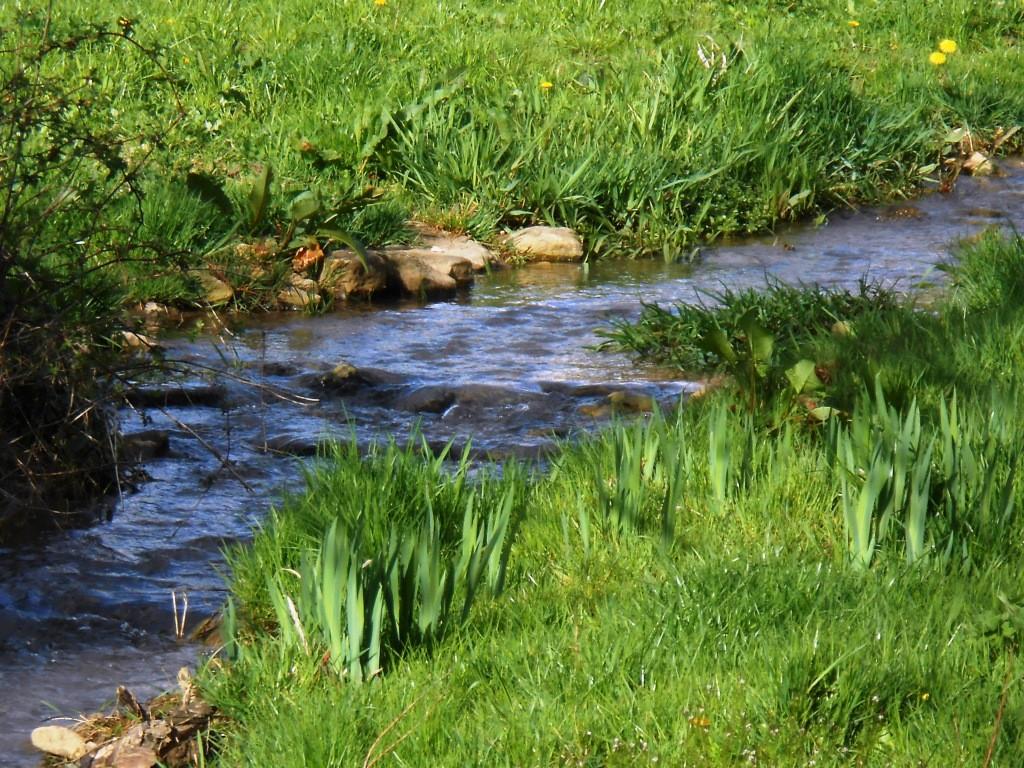 ruisseau bordant le verger