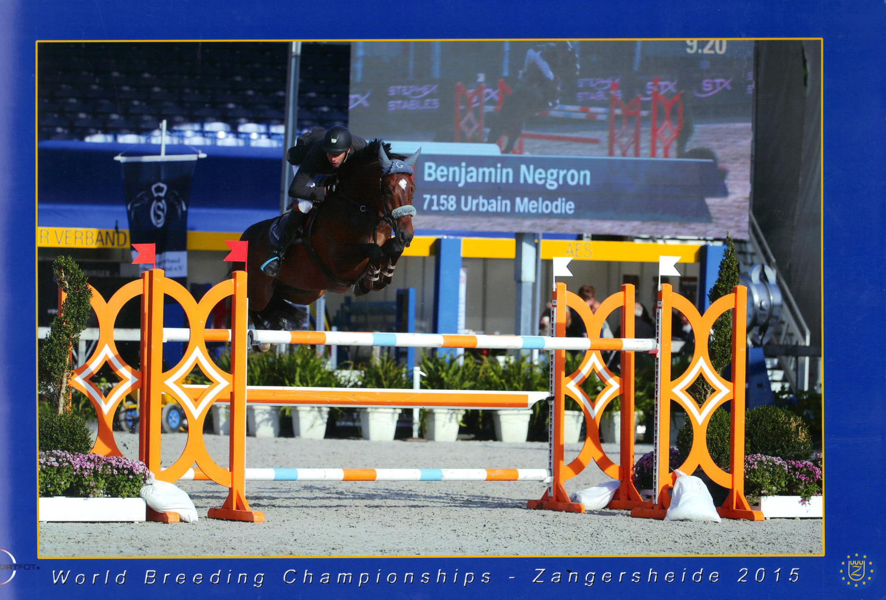 Ecurie du patys sur salon de provence grans chevaux de for Sport 2000 salon de provence