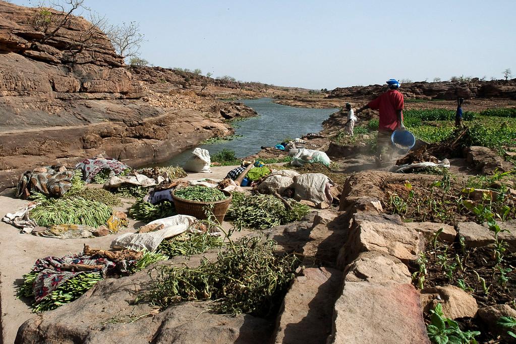 Sur les bords du Baní, c'est la cueillette du tabac. La terre cultivable est très limitée.