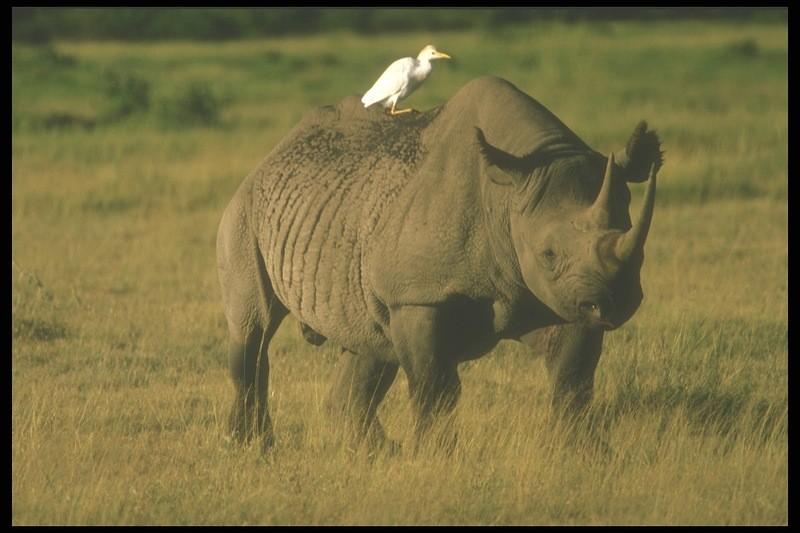 богатый животный мир