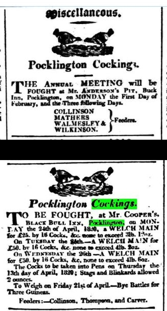 Pcklington cockfighting notices c1820