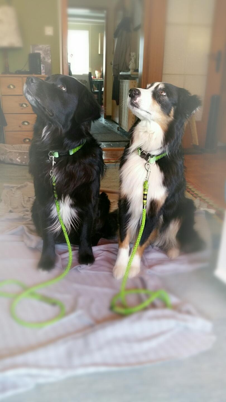 Dogs & Spirit, Indigo und Nepomuk die beiden Therapiehunde von www.dogs-spirit.net