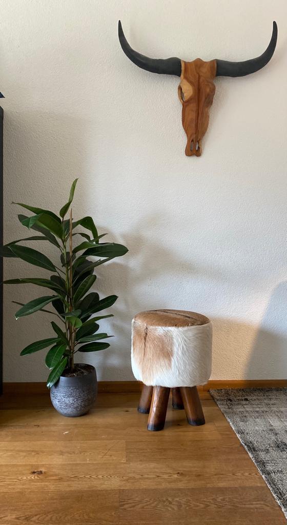 fleurige thuis met hippe kamerplanten - Plant Rebelz