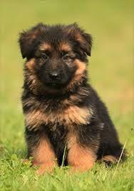 de buurman wil zijn puppy voor maar 2 jaar