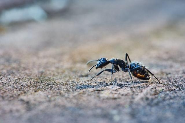 Mieren op een natuurlijke manier bestrijden