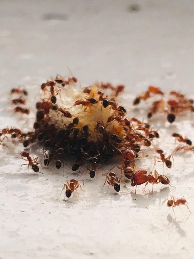 Wat zijn de taken van de mier?