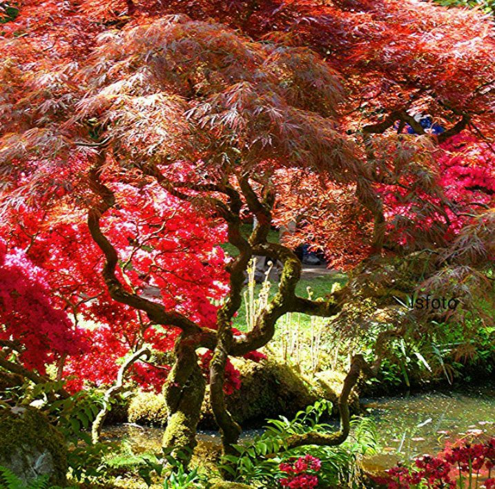 Japanse tuin Clingendael bezoeken