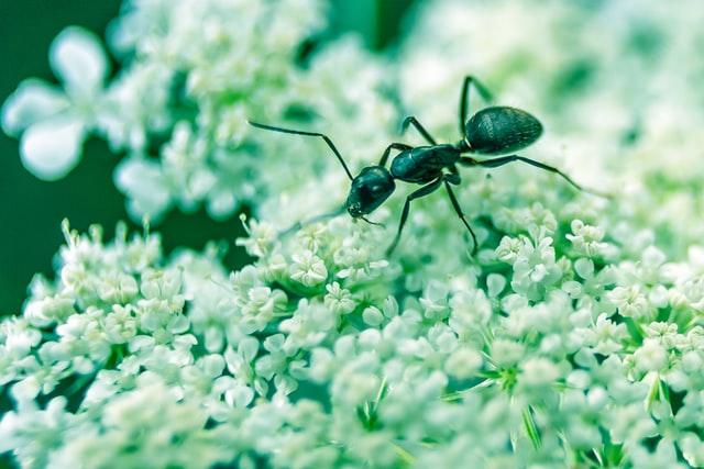 Zijn mieren schadelijk of nuttig voor de tuin?