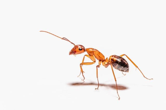 Mieren in de tuin zijn ze nuttig of schadelijk?