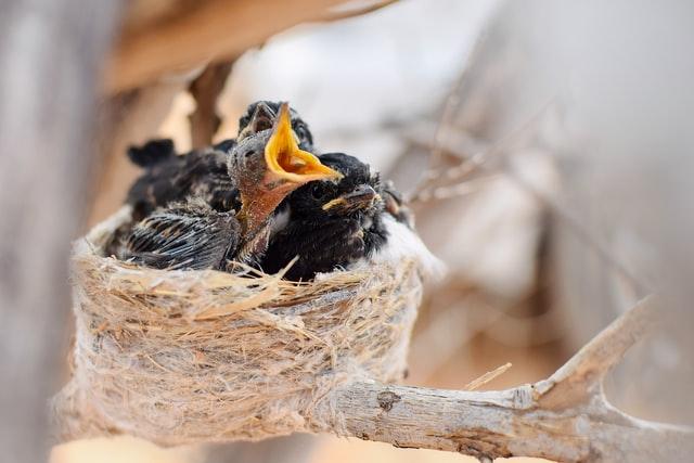 Beleef de Lente 2021 - Vogels bekijken met webcam