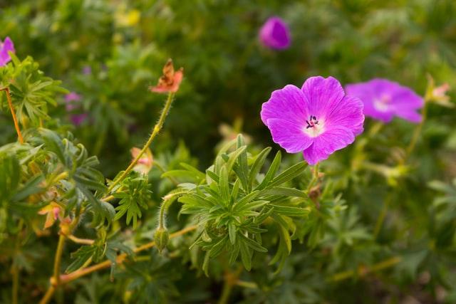 Tuintrends 2021- Groene planten in de tuin