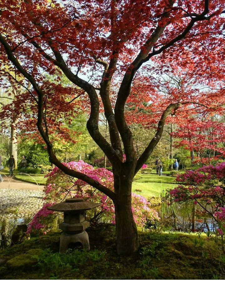 de grootste Japanse tuin van Nederland Landgoed Clingendael