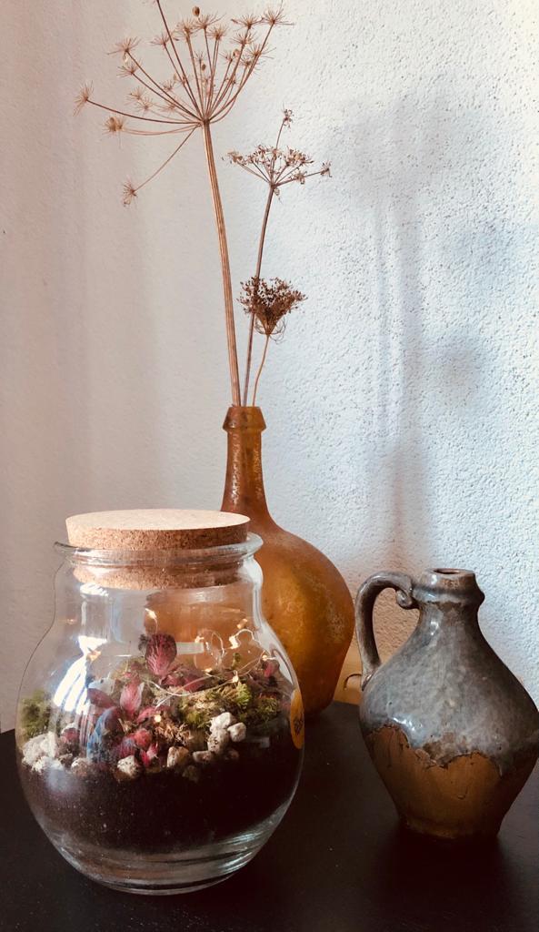 Plant Rebelz terrarium - Plant in fles zelf maken