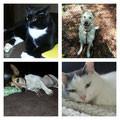 Lilli, Sugar, Gismo und Paul