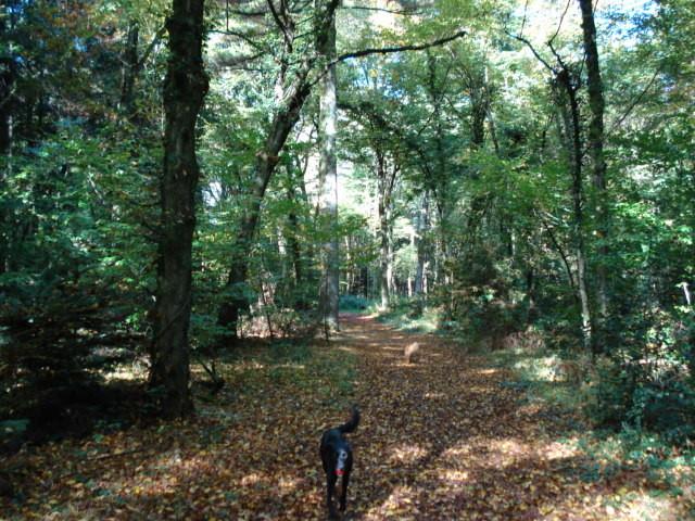 Spaziergang im Wald bei Bourg-en-Bresse