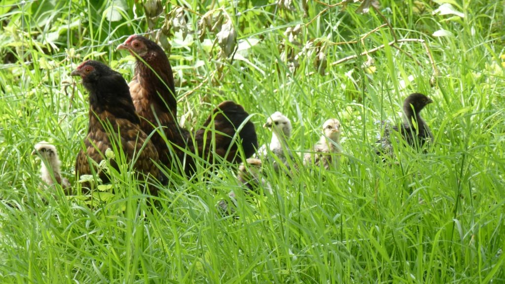 Frieda und Thobeka mit ihren Kleinen