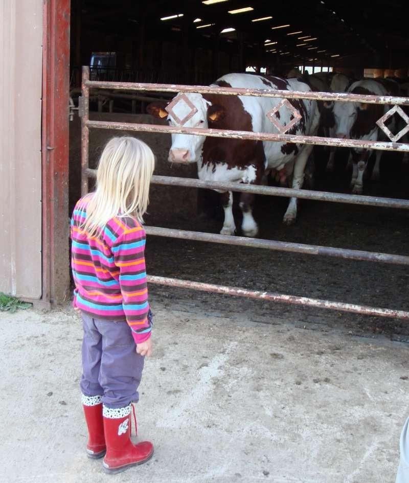 Zora guckt im Bauernstil den Kühen zu
