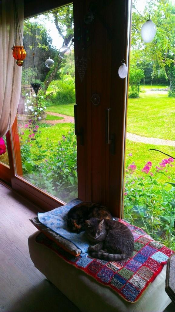 Sanssouci und Grizzly geniessen die kühleren Temperaturen drin