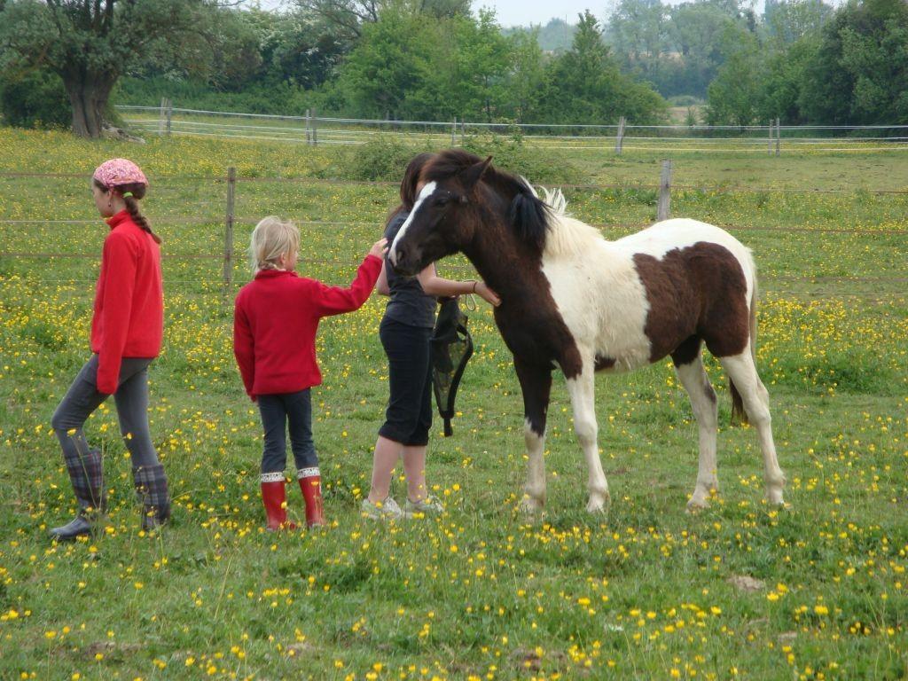Die Pferde werden von der Koppel geholt