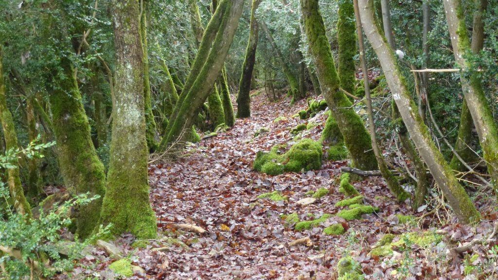 Spazier in einem Buchswald in den Weinbergen