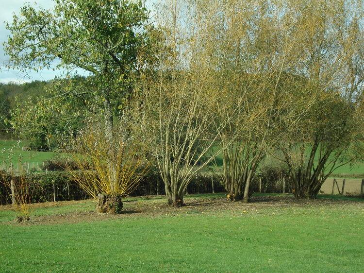 Der Platz unter den Weiden ist nun schön und aufgeräumt