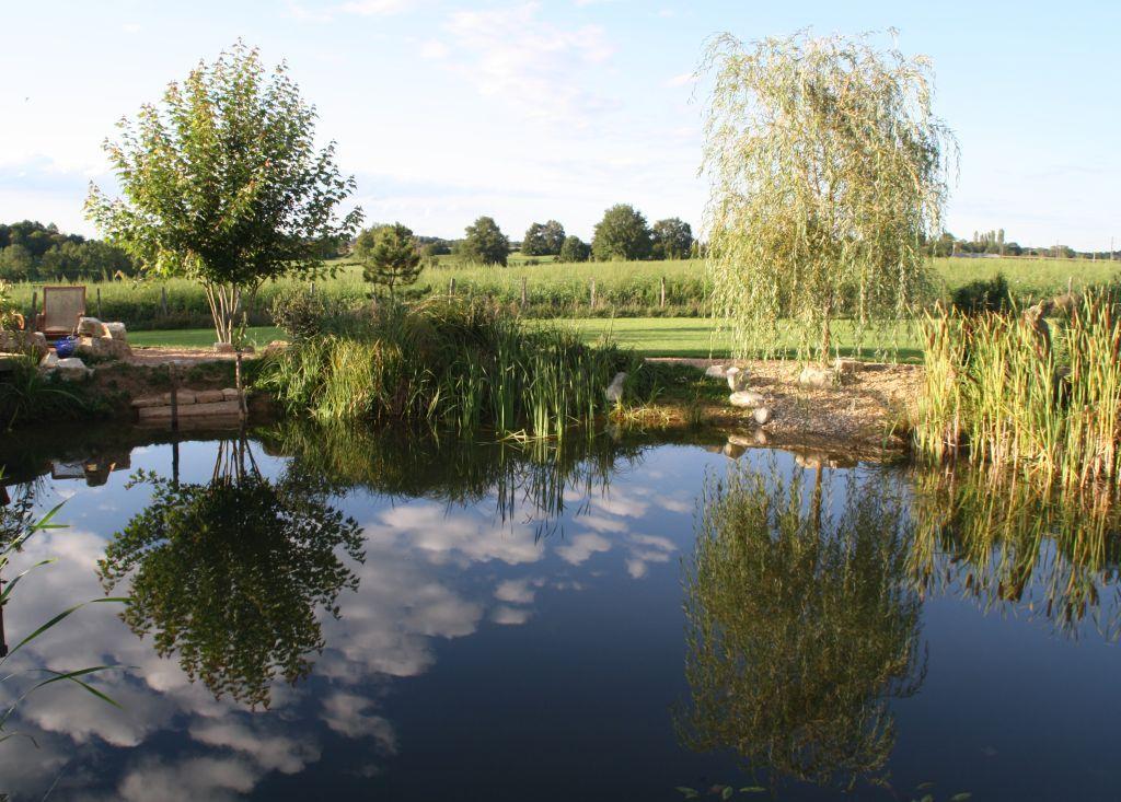 Schöne Stimmung am Teich