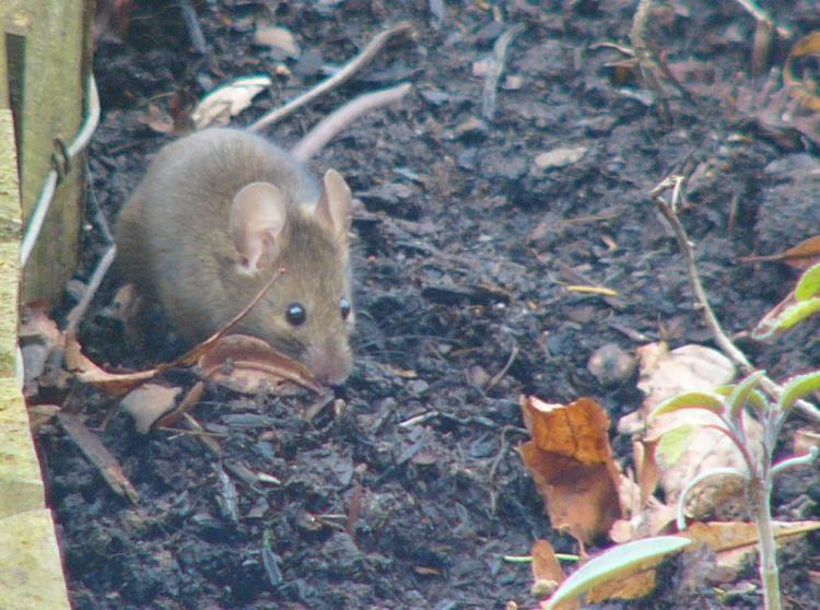Mäuse sind auch schon wieder unterwegs