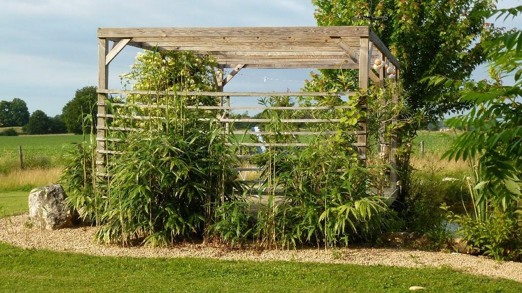 Der Bambus am Ponton wächst in diesem nassen Frühling ausserordentlich gut