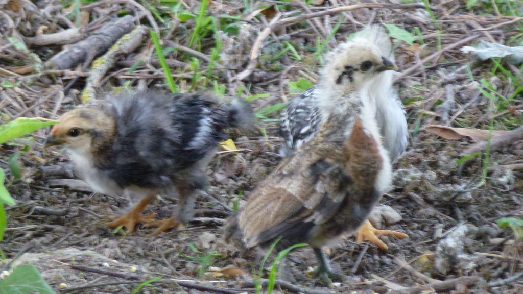 Die Kleinen von Thobeka und Frieda - immer in Action
